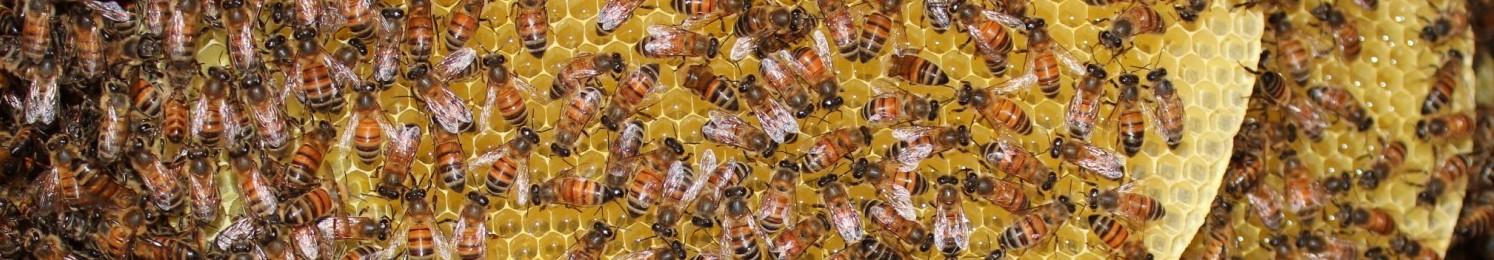 Bee Friendly Austin